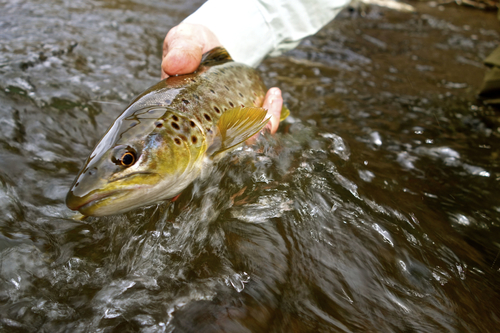 keepemwettrout